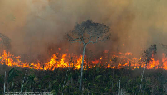 Fire line moves through a degraded forest area in an undesignated public forest area in Porto Velho, Rondônia on July 29, 2021. Photo © Christian Braga / Greenpeace